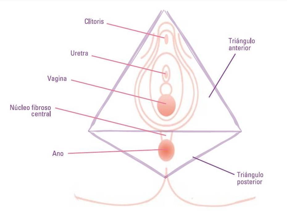 Masaje perineal durante el embarazo | Un blog hecho por y para ti ...